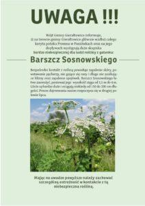 barszcz_sosnowskiego